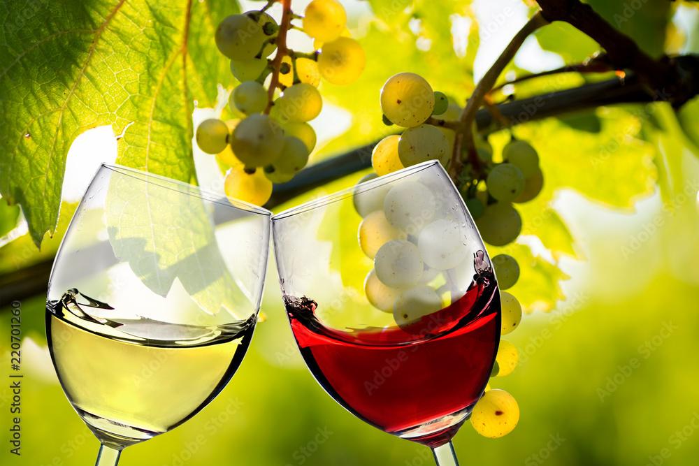 Anstoßen im Weingut
