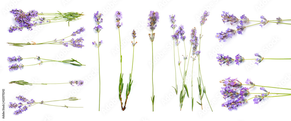 Fototapety, obrazy: Set with aromatic fresh lavender on white background