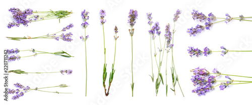 Set with aromatic fresh lavender on white background Wallpaper Mural