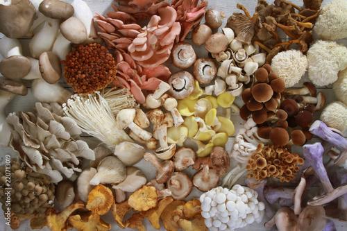 Obraz na płótnie fresh uncooked exotic mushroom varieties