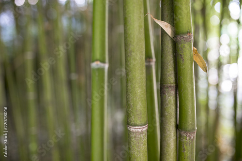 Deurstickers Bamboo Bamboo garden. Bamboo forest natural green background
