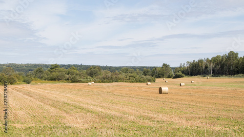 Round hay bales golden field, summer sun, landscape, no people.