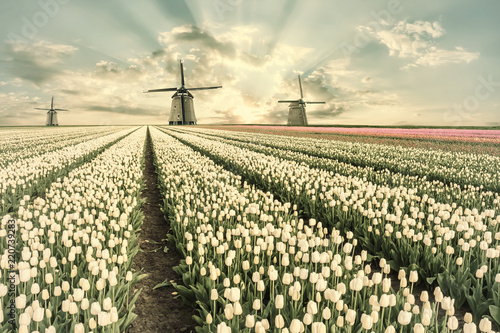 Vintage landscape with tulip fields and windmill Canvas