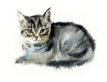 Domestic Cat. Cats Background. Watercolor Hand Drawn Illustration