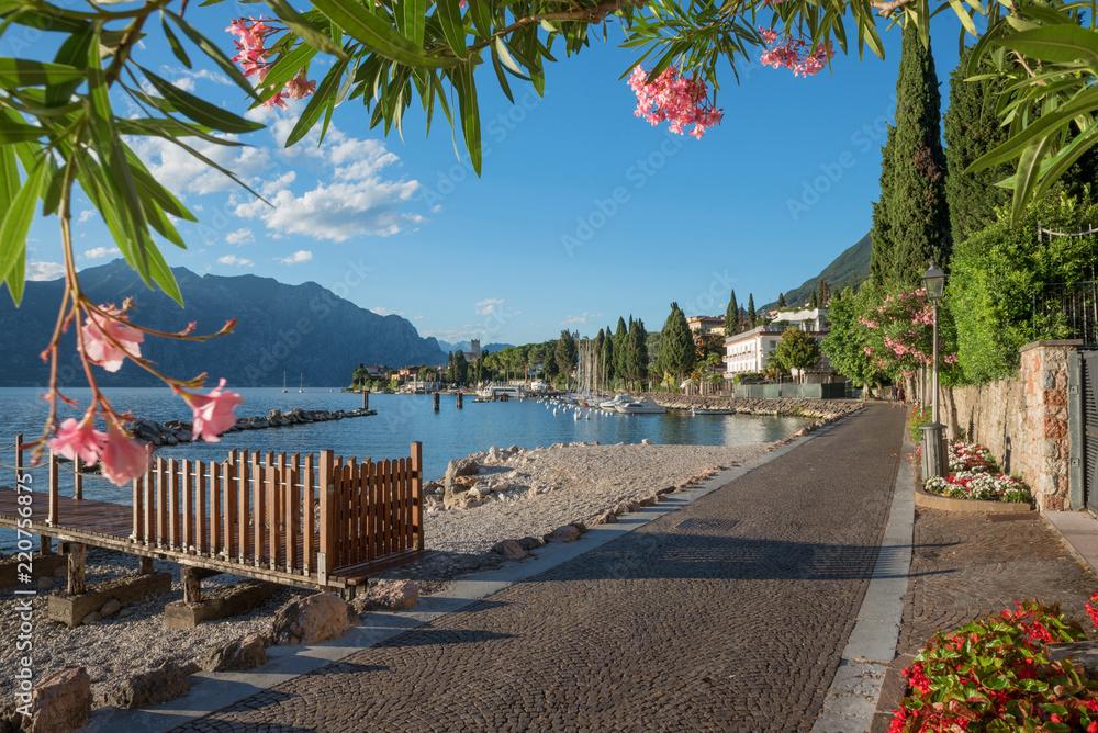 Fototapety, obrazy: Spazierweg am Gardaseeufer Malcesine, Blick durch Oleanderzweige