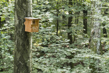 A Bird Booth On A Tree Trunk In A Forest.