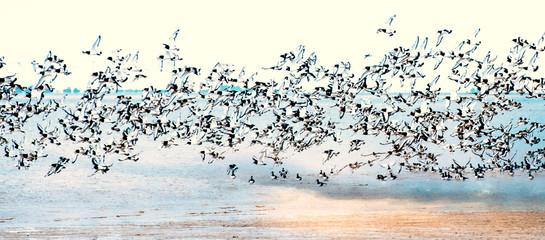 Fototapeta Niebo Freiheit, Traum vom Fliegen, Möwenflug, Möwenschwarm über der Nordsee :)