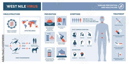 Obraz na plátně West nile virus infographic