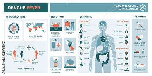 Fotografie, Obraz  Dengue fever infographic
