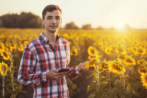 Agronomist Using a Tablet for read a report on a sunflower agriculture field Wallpaper Mural