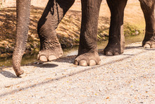 Elephant Legs And Trunk