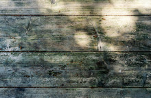 White Pine Plank Background In Weathered Condition With Mould And Algae In Dappled Sunlight.