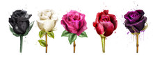 Watercolor Colorful Roses Set ...