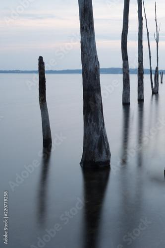 Foto  Multiple Tree Stumps Manasquan Reservoir