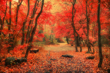 Park alley in autumn season. Colorful foliage, quiet place, meditation