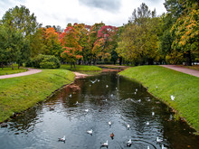 View Of A Group Of Autumn Trees Near A Pond With Birds In The Autumn In The Park