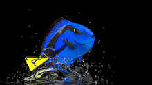 Cute Reef Tank Fish Perfect Co...