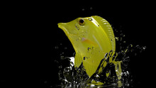 Shiny And Wet Yellow Tang Trop...