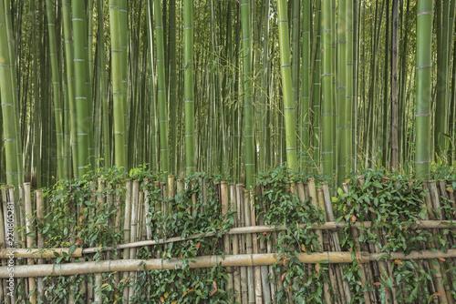 In de dag Kyoto Bamboo forest in Arashiyama,Kyoto, Japan