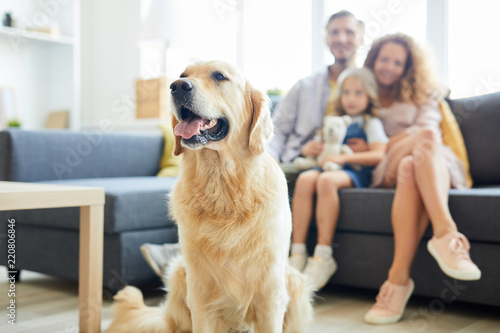 Cute fluffy labrador pet sitting in living-room with family of three on backgrou Canvas Print