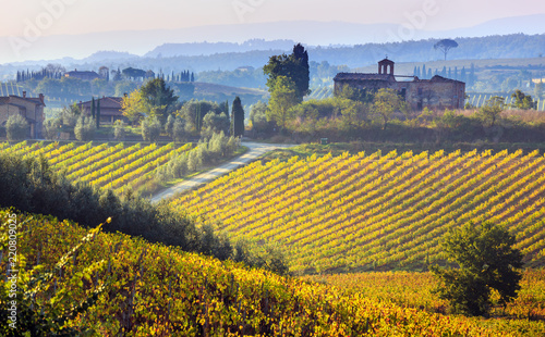 Tuinposter Wijngaard Vineyards in Italy. Photo taken in Tuscany at autumn.