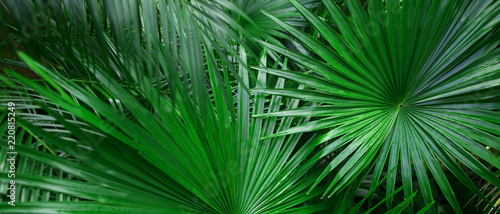 Banner of tropical leaves for background. Concept of summer and travel agency, jungle theme and blog heading.