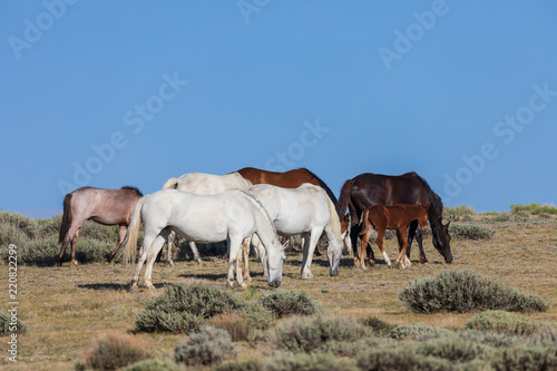 Wild Horses in Sand Wash Basin Colorado