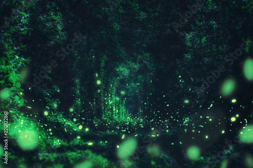 Świetliki w dzikim lesie. znane romantyczne miejsce zwane Tunnel of Love, Klevan, Ukraina. naturalne lato (wiosna) w tle (kolaż)