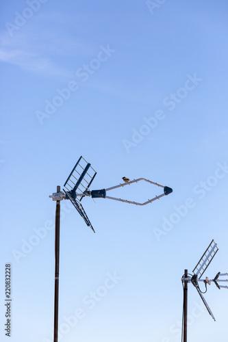 Fotografía  antenas en el tejado