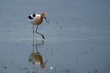 Bird With Long Legs Standing In Water