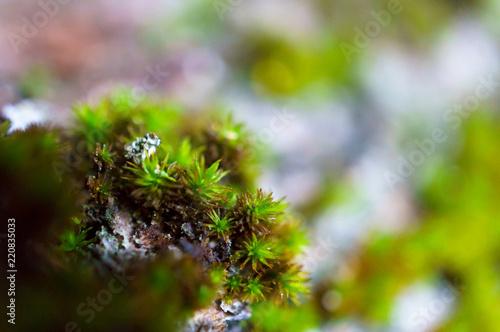 Fotografie, Obraz  Green moss growing in forest