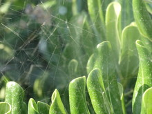 Green. Leaves. Close. Spider Networks. Macro Photography. Luminous. It's Bright.