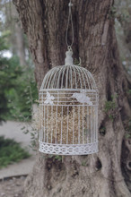 Decorative Birdcage Hanging On A Tree