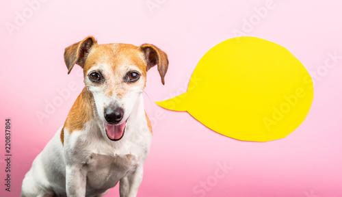 Sly smiling dog face Canvas-taulu