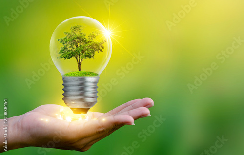 Obraz The forest and the trees are in the light. Concepts of environmental conservation and global warming plant growing inside lamp bulb over dry soil in saving earth concept - fototapety do salonu