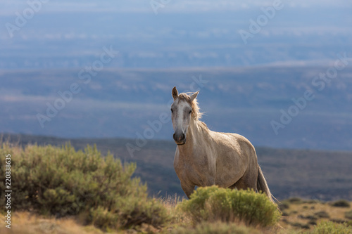Photo  Beautiful Wild Horse in the Colorado High Desert