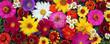 Leinwandbild Motiv Flower background, top view. Postcard, background for a congratulation.