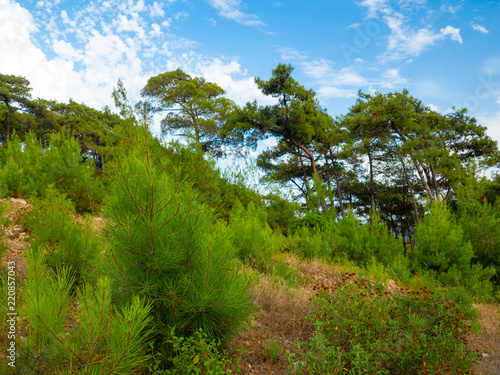 Panoramic view of natural landscape, mountains on the background © Maria Kuzkina