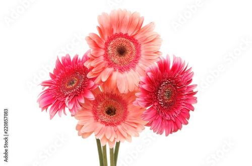 Poster Gerbera Four gerbera flowers