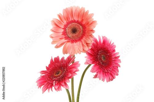 Staande foto Gerbera Three gerbera flowers