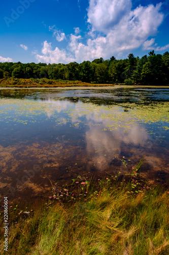 Fotografie, Obraz  Swamp Marsh Summer