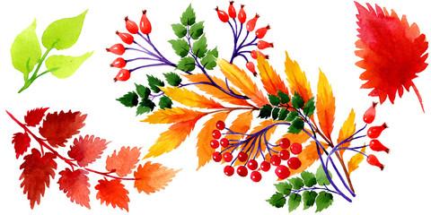 Watercolor autumn ornament of leaves. Leaf plant botanical garden floral foliage. Isolated illustration element. Aquarelle leaf for background, texture, wrapper pattern, frame or border.