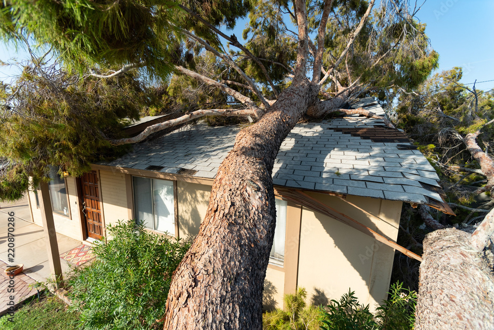 Fototapeta Tree Damage to Roof after Major Monsoon