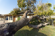 Tree Damage To Roof After Majo...