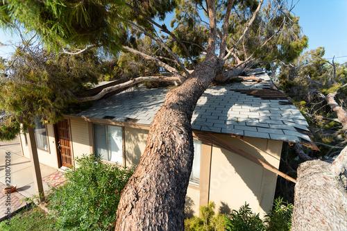 Fototapeta Tree Damage to Roof after Major Monsoon obraz