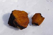 Chaga Mushroom ( Inonotus Obliquus )  Big Chunks Lying On The Snow