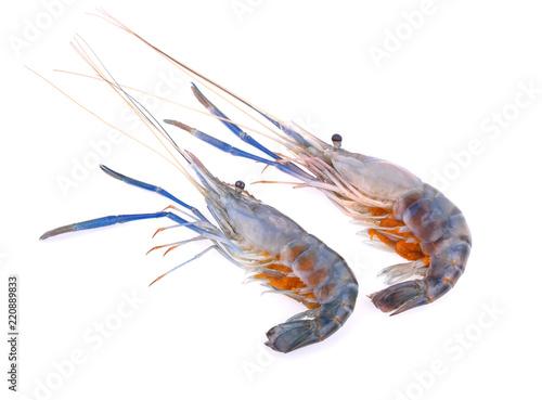 Giant freshwater prawn isolated on white background - Buy