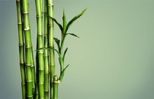 Many Bamboo Stalks  On Backgro...