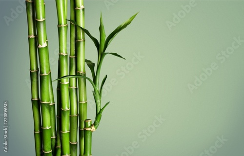 Many bamboo stalks  on background