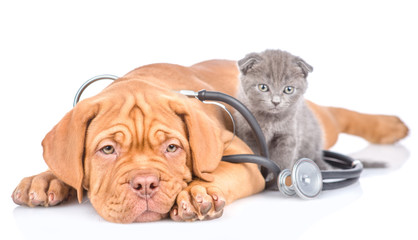 Tiny kitten and puppy with stethoscope on his neck. isolated on white background